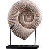 Uttermost Kaleho Shell Sculpture
