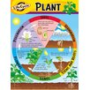 Trend Enterprises Life Cycle of A Plant Chart (Set of 3)