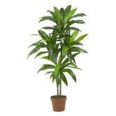 Dracaena Silk Floor Plant in Pot