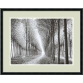 'Tree Parade' by Chip Forelli Framed Photographic Print