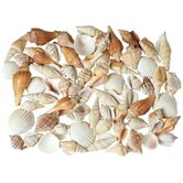 PCL Seashell Figurine