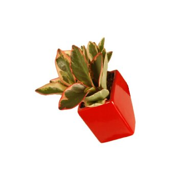 Arcadia Garden Products Urban Gardening Square Wall Planter