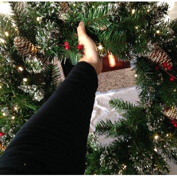 Christmas Tree Holyoke Ma