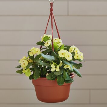 August Grove Leadore Round Hanging Planter