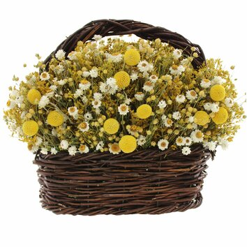 Lark Manor Walking on Sunshine Basket