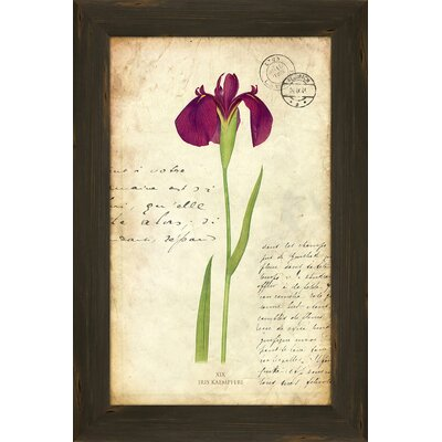 Iris II Framed Graphic Art by PTM Images