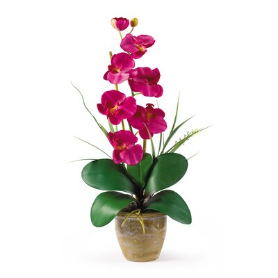 Phalaenopsis Silk Orchid Arrangement in Beauty Pink by Nearly Natural