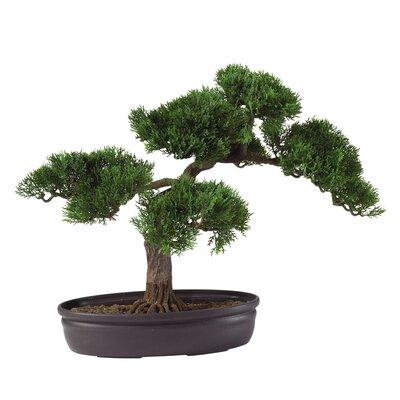 Nearly Natural Silk Cedar Bonsai Desk Top Plant in Planter
