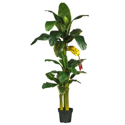 Triple Stalk Banana Tree in Pot by Nearly Natural
