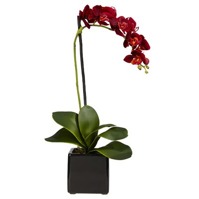 Nearly Natural Phaleanopsis Orchid with Black Vase Silk Flowers
