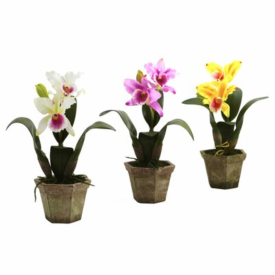 Nearly Natural Cattelya Orchid with Vase
