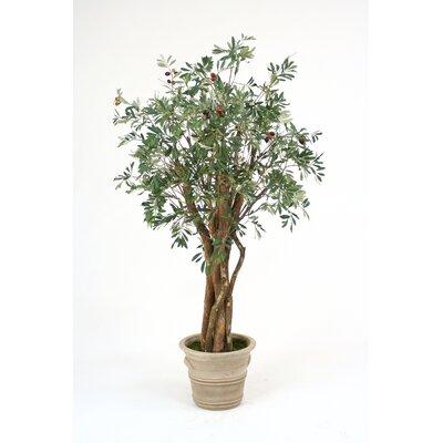 Distinctive Designs Olive Tree in Pot