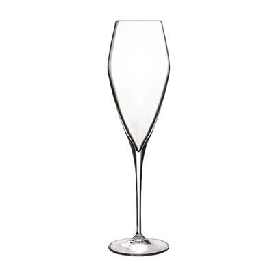 Atelier Champagne Glass by Luigi Bormioli