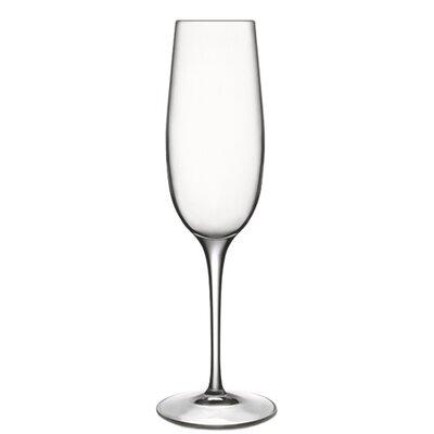 Crescendo Champagne Glass by Luigi Bormioli
