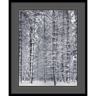 Amanti Art 'Pine Forest in the Snow, Yosemite National Park' by Ansel Adams Framed Photographic Print