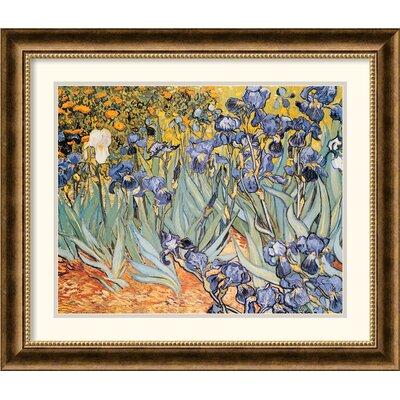 Amanti Art 'Irises In the Garden' by Vincent van Gogh Framed Graphic Art