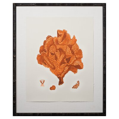 Tangerine Coral Giclee IV Framed Graphic Art by Mirror Image Home