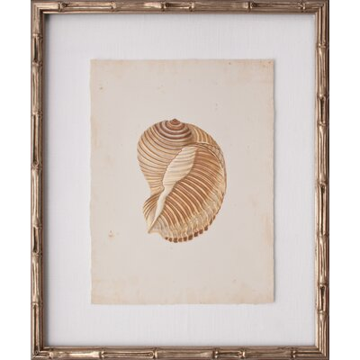 Mini Martini Shell I Framed Graphic Art by Mirror Image Home