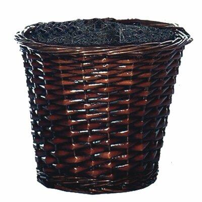 Vickerman Co. Blue Ridge Fir Executive Sakaki Tree in Basket