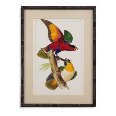 Lemaire Parrots I Framed Painting Print by Bassett Mirror