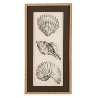 Pan Pacific 'Antique Shell Study I' Framed Painting Print by Bassett Mirror