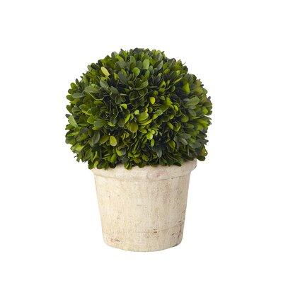 Sage & Co. Boxwood Desk Top Plant in Pot