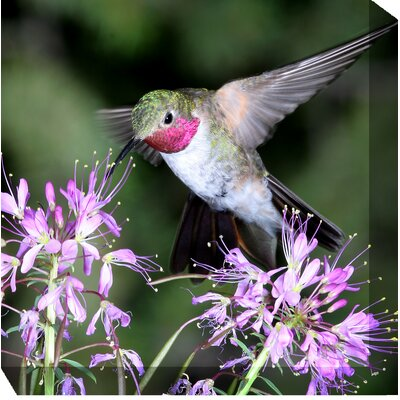 West of the Wind Outdoor Canvas Art Hummingbird #1 Wrapped Photographic Print on Canvas