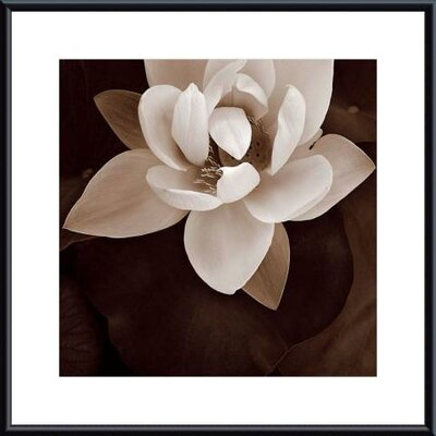 Printfinders Amazon Lotus by Rebecca Swanson Framed Photographic Print