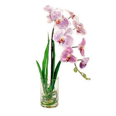 Spotted Phalaenopsis Water Vase by Creative Displays, Inc.