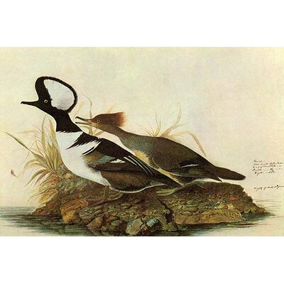 Gallery Direct 'Canada Goose'' by John James Audubon Graphic Art on
