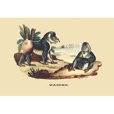 Mandril by E. F. Noel Painting Print by Buyenlarge