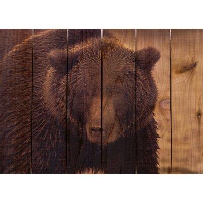 Gizaun Art Big Bear Photographic Print