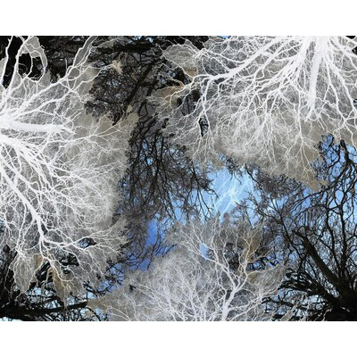 Carlyle Fine Art Nature Beyond Forest by Jordan Carlyle Graphic Art