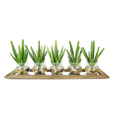 5 Piece Euphorbia Cactus Pot and Display Tray Planter by Creative Displays, Inc.
