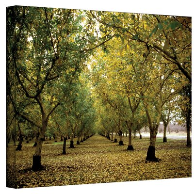 ArtWall Fall Orchard by Kathy Yates Photographic Print on Canvas