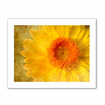 ArtWall 'Flowers in Focus I' by David Liam Kyle Graphic Art Canvas