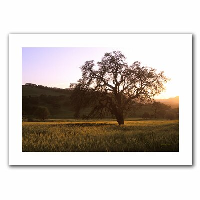 ArtWall 'Golden Hour' by Kathy Yates Photographic Print on Canvas
