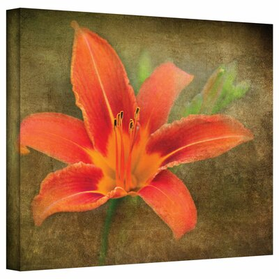 ArtWall 'Flowers in Focus IV' by David Liam Kyle Graphic Art Canvas