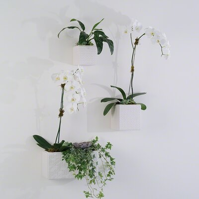 Dimple Ceramic Square Wall Vase by Global Views