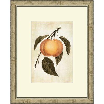 Lovely Fruit III Framed Graphic art by Melissa Van Hise