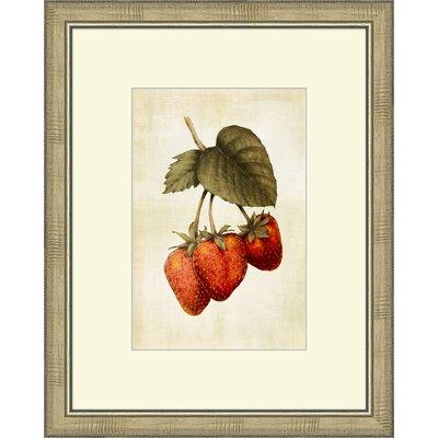 Lovely Fruit IV Framed Graphic Art by Melissa Van Hise