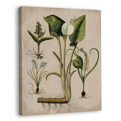 Lilies on Linen IV Graphic Art on Wrapped Canvas by Melissa Van Hise