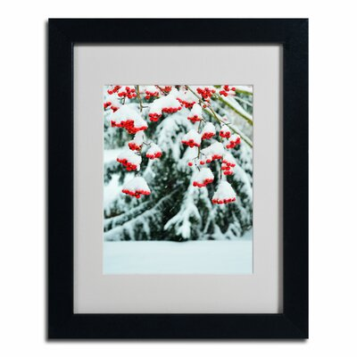 'Winter Berries and Pine' by Kurt Shaffer Framed Photographic Print by Trademark Art