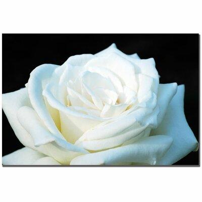 "Trademark Fine Art ""White Rose II"" by Kurt Shaffer Photographic Print on Canvas"