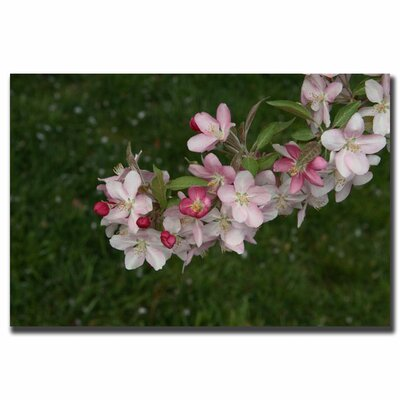 """Trademark Fine Art """"Pink Flowers"""" by Cary Hahn Photographic Print on Canvas"""