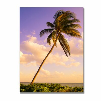Trademark Fine Art 'Lone Palm' by Preston Photographic Print on Canvas