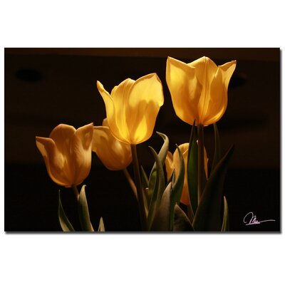 'Yellow Tulips VIII' by Martha Guerra Photographic Print on Canvas by Trademark Art