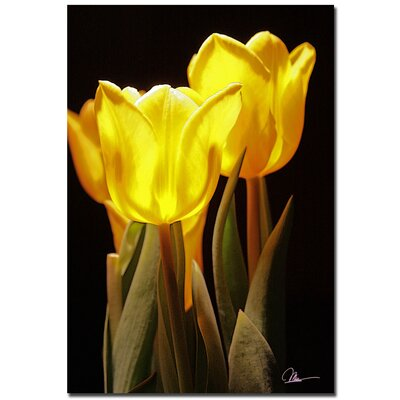 'Yellow Tulips III' by Martha Guerra Photographic Print on Canvas by Trademark Art