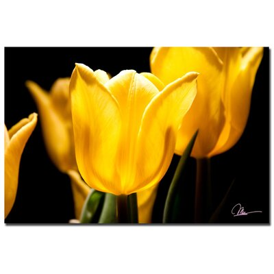 'Yellow Tulips V' by Martha Guerra Photographic Print on Canvas by Trademark Art