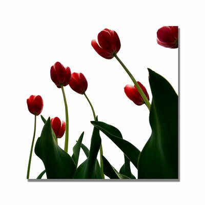 'Red Tulips from Bottom Up V' by Michelle Calkins Photographic Print on Canvas by Trademark ...